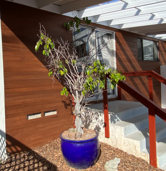 Stained Entrance in Clairemont